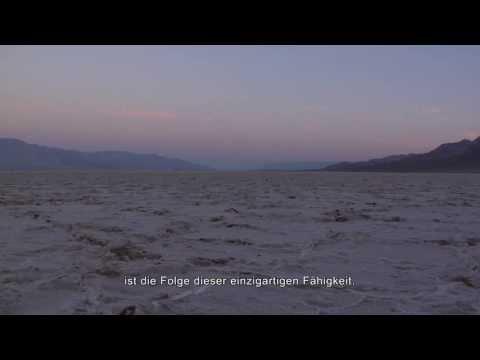 ALPHABET - Trailer